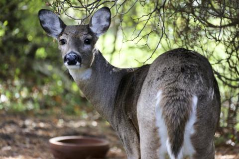 Farmer loses deer, boar when hunting preserve fences are cut