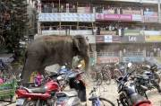 Wild elephant rampage in Indian village (VIDEO)