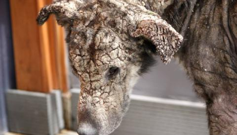 Dog who turned to stone never knew she could be loved so much (PHOTO, VIDEO)