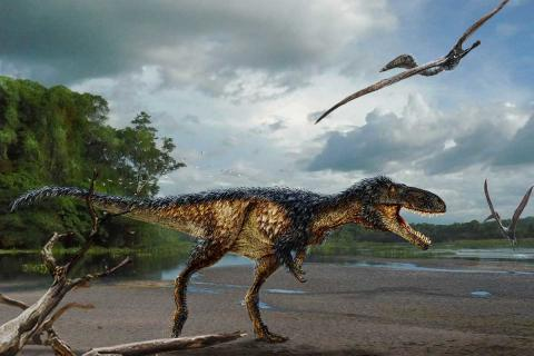 Skull of mini T. rex shows it gained intelligence before size