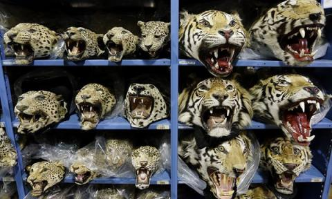 UN calls for overhaul of national laws to tackle wildlife crime