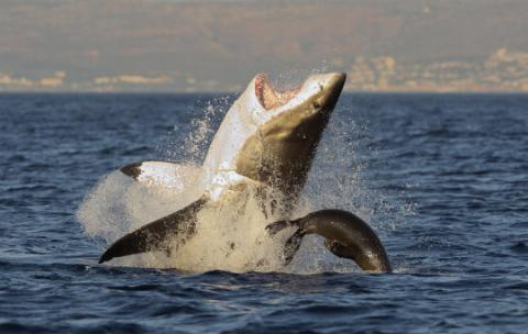 Sharks of the same species can have different personalities - Study