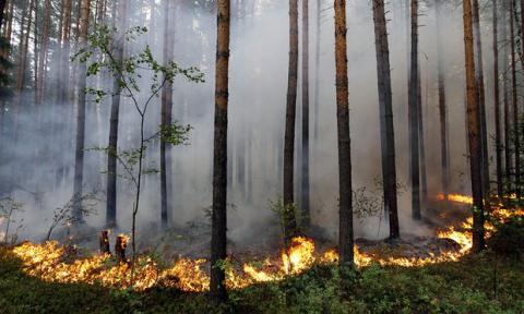 Satellite data analysis shows Russia significantly under-reports forest wildfires