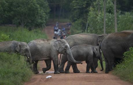 Thai farmers use bees to deter elephants from their fields