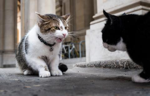 Britain's govt seeks help to stop cat fights - on 10 Downing Street doorstep (PHOTO)