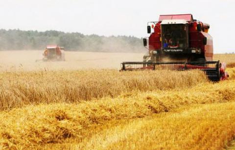 Ukrainian farmers harvested nearly 39mln tons of cereal grains