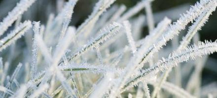 First frosts recorded in Kyiv