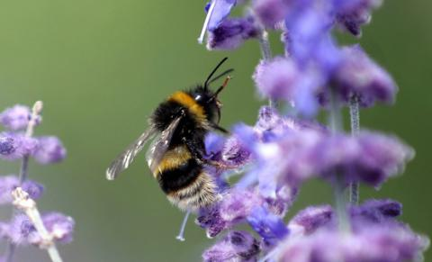 Bees may have emotions too - Research