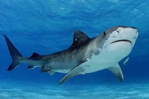 Examining the social networks of sharks