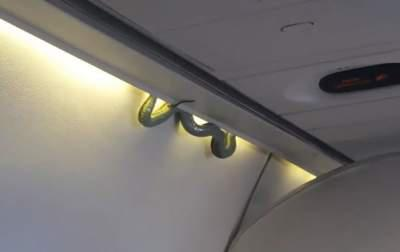 Passengers Find Snake on a Plane to Mexico City