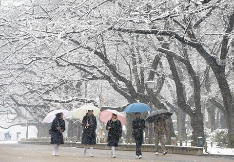 First November snow in more than 50 years hit Tokyo