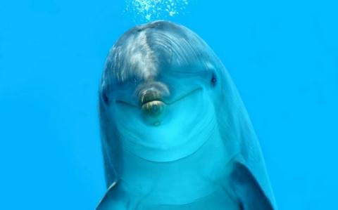 Humans Are Being Taught to Echolocate Like Dolphins - and It