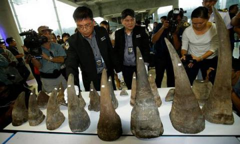 Thai authorities seize 21 rhino horns worth $ 5m from smugglers