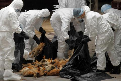 H5N1 bird flu alert raised in Malaysia