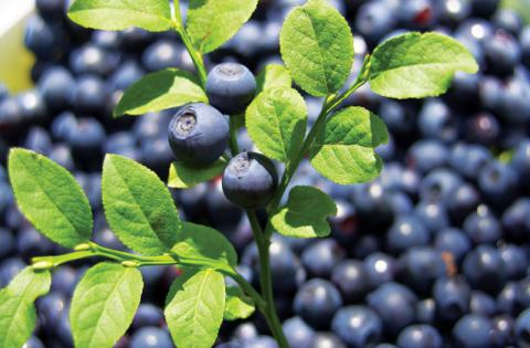 Ukraine triples berries exports in 2016 - Stats