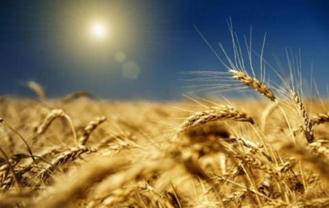 Grain exports from Ukraine may reach over 38 m tonnes - USDA forecast