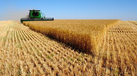 More than 39m tonnes of grain exported from Ukraine since 2016/2017 MY beginning