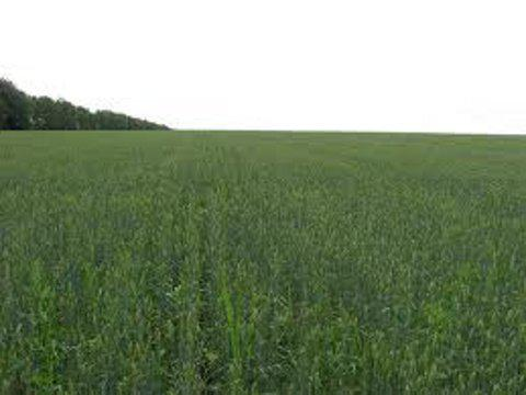 Ukrainian govt desides state-owned farm land to be leased for up to 7 years via auctions