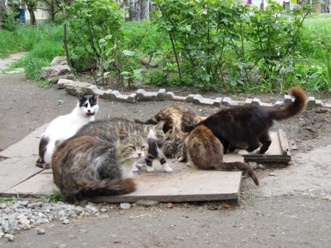 Kyiv city council bans entrapment, killing of stray cats