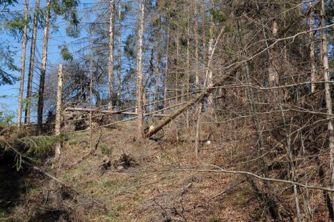 Climate change speeding up forest drying in Ukraine - State Forest Agency