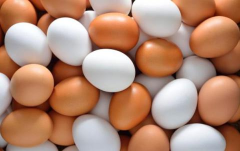 Millions eggs recalled in Germany, Netherlands, and Belgium due to high content of banned toxin