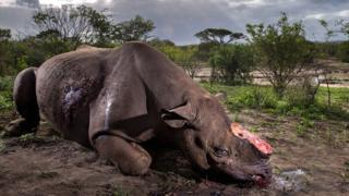Photo of butchered rhino wins top award