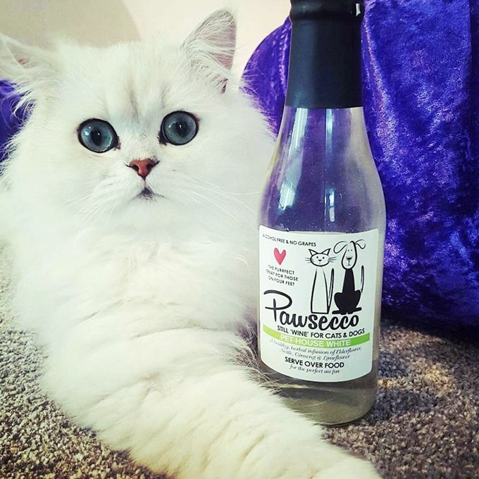 Prosecco for cats and beer for dogs: Tesco goes crackers for pet ...