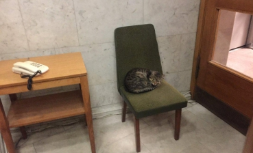 Ukrainian Foreign Ministry hires cat-diplomat to stand up to Russian rats