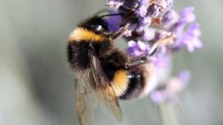 Pesticides put bees at risk, European watchdog confirms