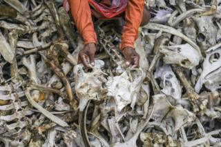 Why India's bone collectors are living in fear