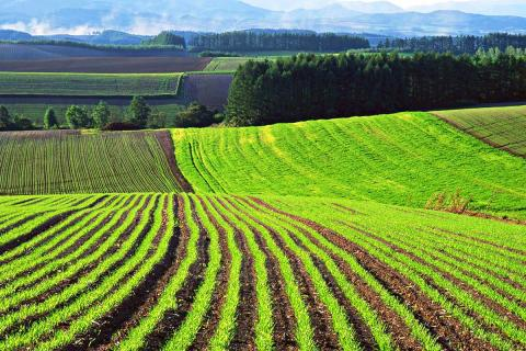 Ukrainian government approves bill transferring 500,000 hectares of land to farmers' ownership