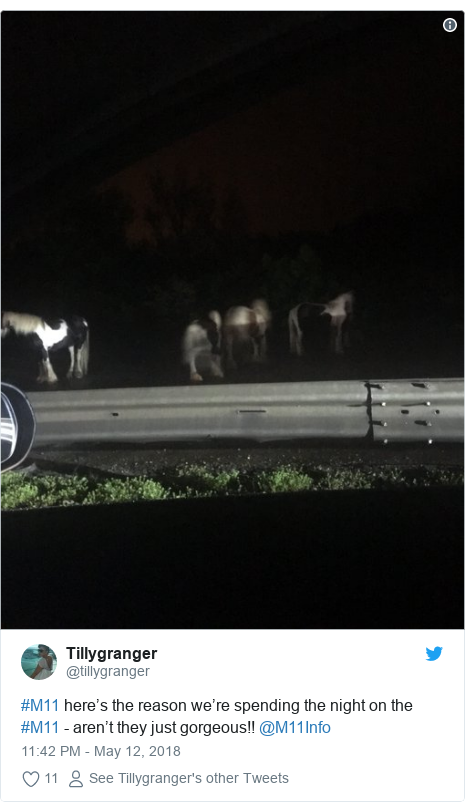 Escaped horses force M11 closure near Harlow