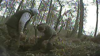 Badger baiting: Wales