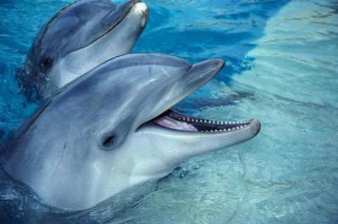 Combat dolphins that formerly served with Ukrainian Navy die in Crimea