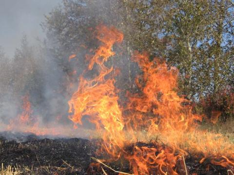 Large-scale forest fire in Kherson region localized