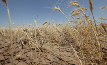 Drought takes 25 percent of Ukraine