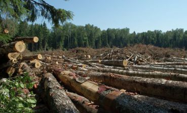 Ukrainian Parliament restricts use of processed timber, suspends lumber exports