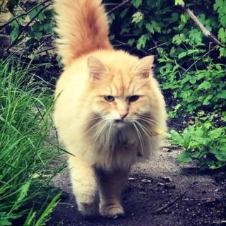 Arrest after Instagram cat Mr Muk stolen from Islington