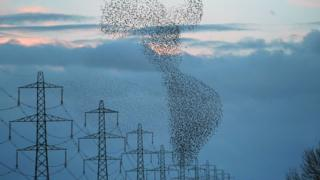 In pictures: Starlings put on aerial show over Gretna