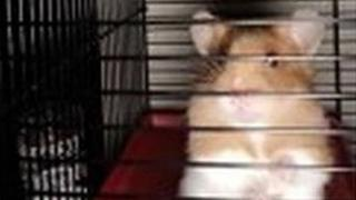 Trapped hamster freed from pipe on tiny ladder in Bridgwater
