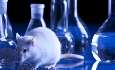 Ukraine to stop animal testing of cosmetics