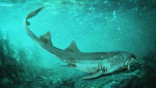 Fossil shark named after 80s video game