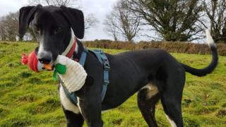 'Britain's loneliest dog' Hector finally finds home
