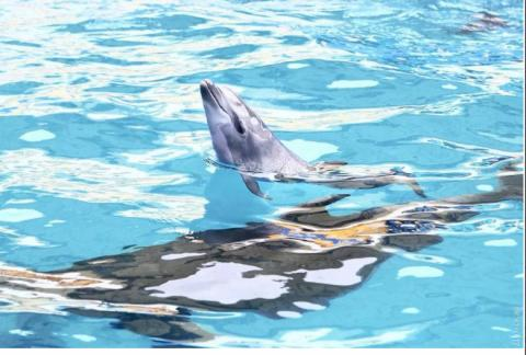 Ukraine to participate in protection of dolphins in Black Sea