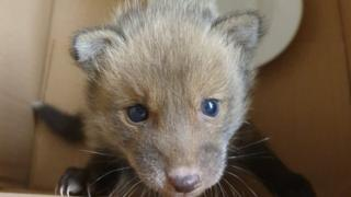 Fox cub rescued from shop cavity wall in London