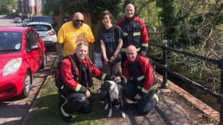 Jesus the dog rescued from Birmingham lake on Good Friday