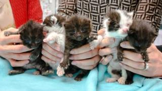Stowaway kittens rescued on US building site