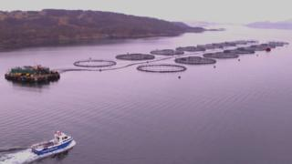 Salmon farming giant Mowi probed over chemical use