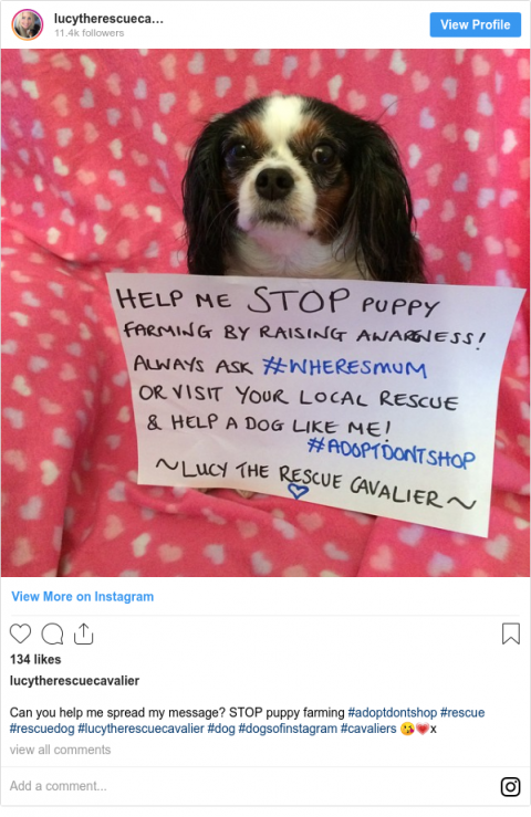 Lucy's Law: Puppy farm ban set to be confirmed