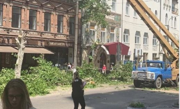 Activists ask Zelensky to stop mass cutting down trees around Ukraine